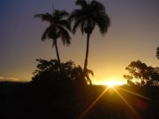 Photo: Palms in the sunset